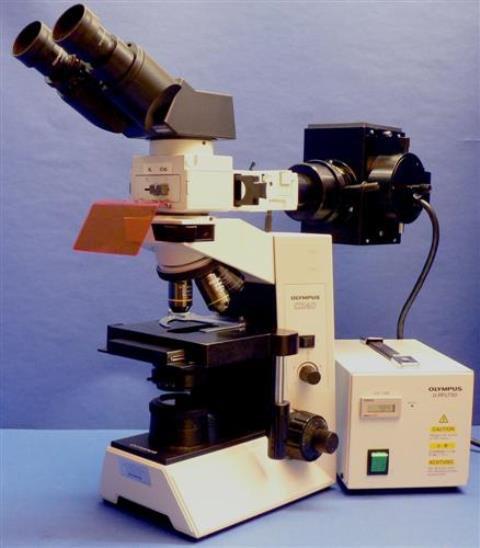 BINOCULAR FLUORESCENCE MICROSCOPE OLYMPUS / CX40 RF200 IMMUNO FLUO (31504)
