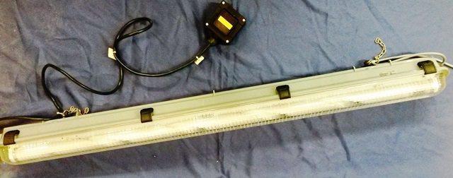 NEON LAMP FRAM / 3203 (9799)