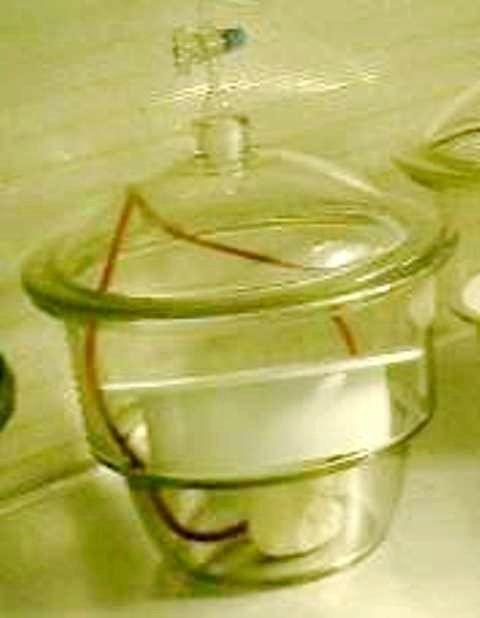 CLOCHE VIDE GLASWERK WERTHEIM (31008)